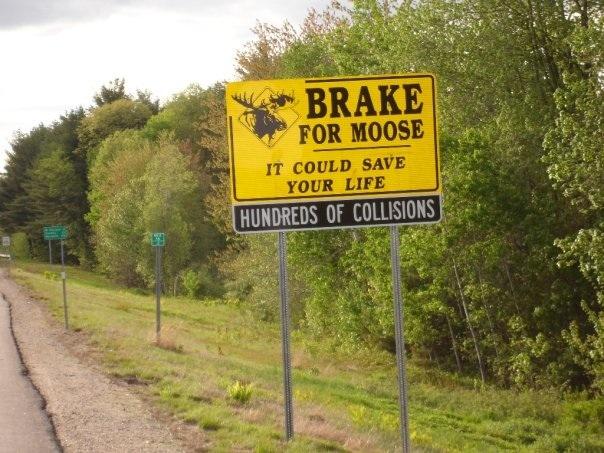 Moose sign