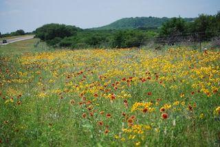 Flowers-Fredericksburg